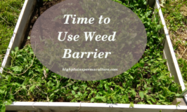 Time to Use Weed Barrier