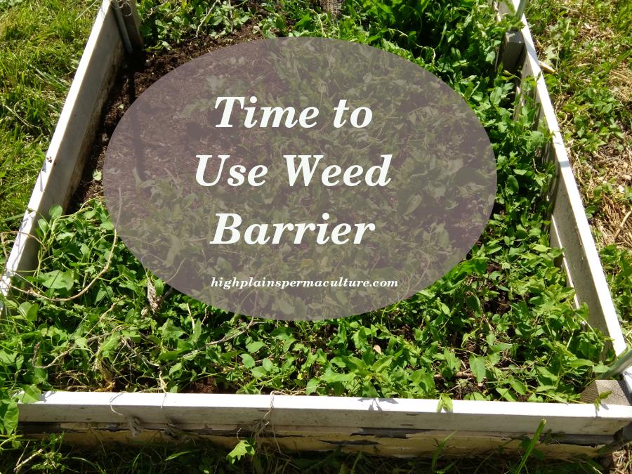 weedBarrier1